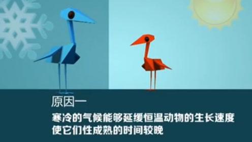 新研究:气候变暖或导致候鸟体型变小