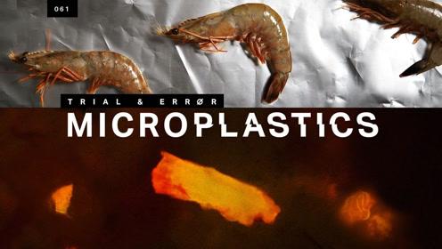 把爱吃的海鲜放大1000倍会发现什么?是吃海鲜还是吃塑料?