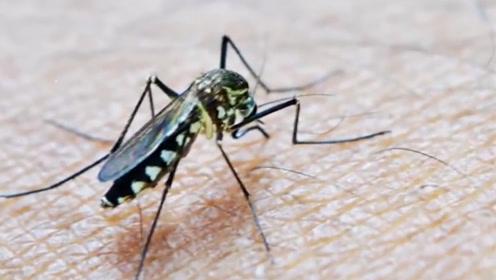 100万只蚊子能把人的血液吸光吗?科学家:不可能的!