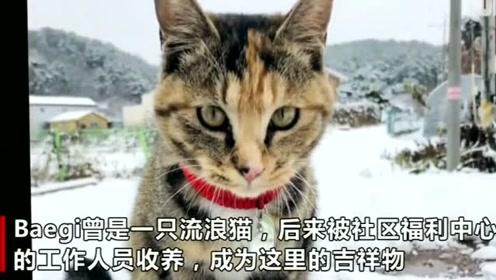 流浪猫为报答主人收养之恩,每天打野味孝敬主人