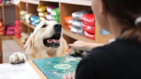 金毛在商店要火腿肠,主人表示没带钱,狗子:卖萌是万能的!