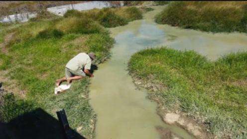 大叔不信邪轻拍水面,接下来的画面让人感到窒息,镜头记录全过程