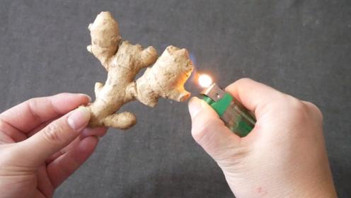 生姜用火机烧一烧,作用大家都没想到,太厉害了,长知识