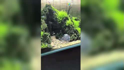 一杯五彩鱼倒入水中!简直太好看了