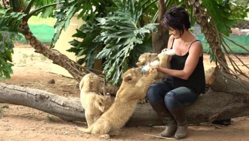 非洲的彪悍女人,一个人饲养35只猛兽,把狮子治得服服帖帖!