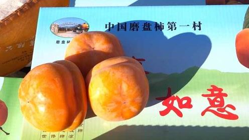 皇上吃了好几个!磨盘柿第一村,种了近600年的宫廷贡品