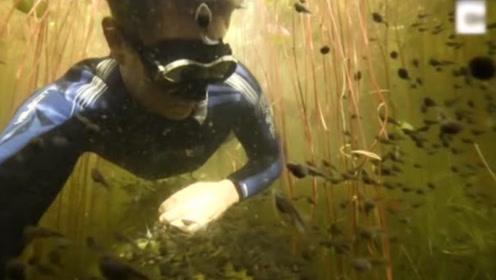 摄影师潜水偶遇蝌蚪大军,成千上万只一起迁徙,场面甚是壮观
