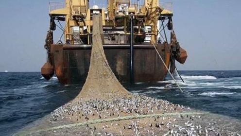 """世界""""最大""""的拖网渔船,一次能捕捞三百多吨,简直是鱼类收割机"""