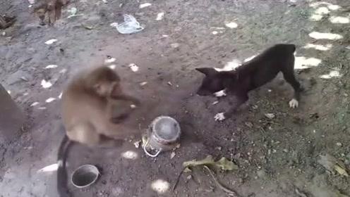 猴子:给你脸了?小老弟?狗子:有本事给我撒开!
