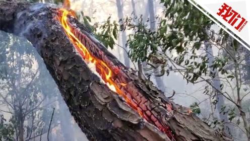 广东佛山山火系勘察公司进行探钻引发 10名相关负责人被刑拘