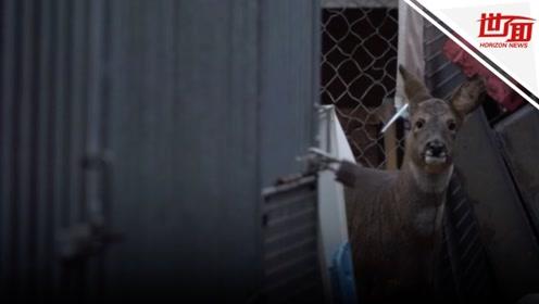 好心男子用养老金做慈善18年 已救助62000只小动物