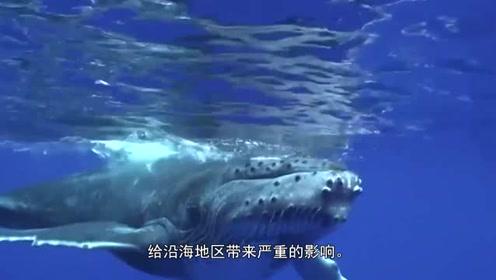 大白鲨身上干干净净,鲸鱼身上为何都是附着物?