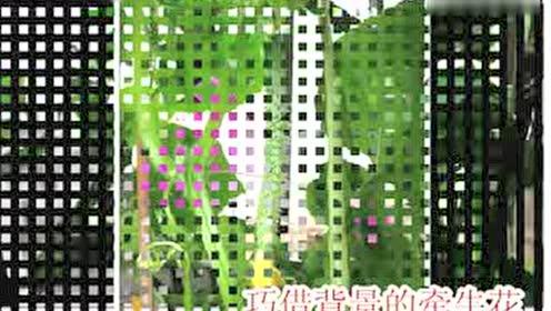 重庆体育彩票快乐十分开奖记录交流群8811177