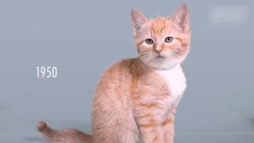 看看近一百年的撸猫变化,变化可真大,真正的撸猫一百年都不变!