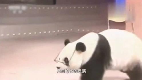 大熊猫巴斯出使美国,饲养员放弃豪华旅馆,睡在动物园车里陪着!
