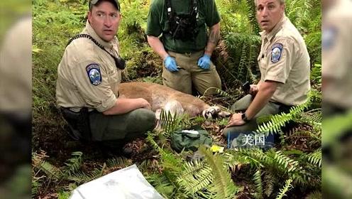 男子整颗头颅被美洲狮咬住奇迹生还 同伙见状逃跑却被咬死