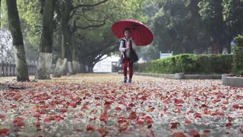 雨后香樟落叶铺满地,市民游客感叹太美,环卫:三倍工作量