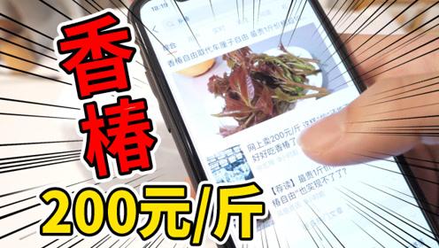 """网上200元/斤的""""网红香椿""""拆开快递后味道也太奇怪了吧?"""