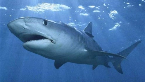 除大白鲨以外海洋的第二危险,弑人无数被人惧怕