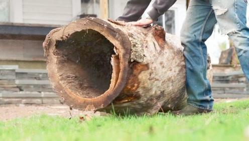 被掏空过的树桩,牛人折腾半天后,起码值200