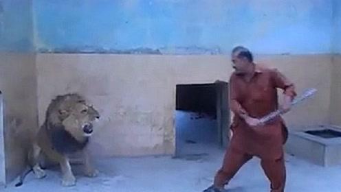 饲养员闯进狮子窝,就像是揍儿子一样,下一秒的画面让人意外!