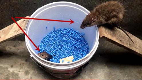 聪明人发明的捕鼠器,如此简单的构造,就能让老鼠崩溃