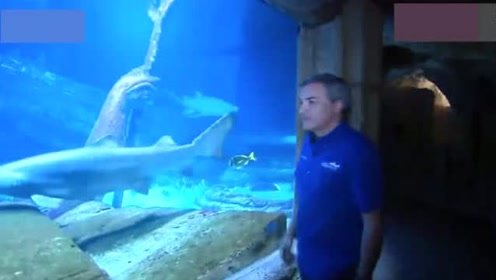 17岁少女遭鲨鱼袭击失去腿和手指,父亲5拳击退鲨鱼救女儿