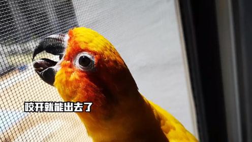 崇尚自由的鹦鹉,吃相如此邋遢,看到自己掉的羽毛表示不相信