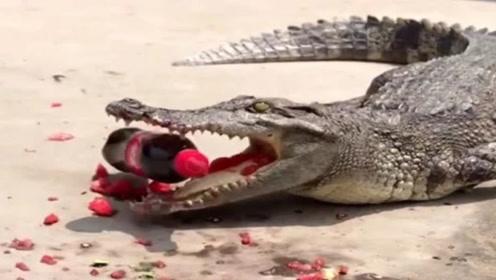 鳄鱼的咬合力有多强?牛人拿来一瓶可乐测试,结果让人头皮发麻