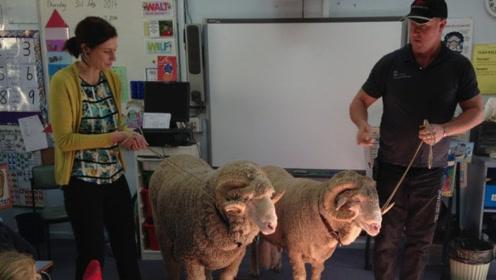 15只山羊登记入学,法国一学校收山羊当学生,还受到市长认可
