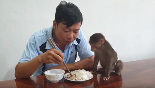 男子当着猴子的面吃凉皮,下一秒千万别笑,镜头记录全过程