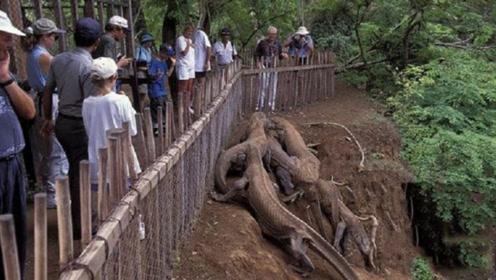 印度村子闯入奇怪生物,众人赶来合影留念,专家急了:赶紧撤离!