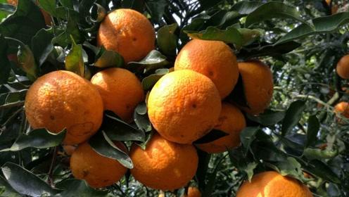 日本最昂贵的几种水果,昂贵的原因不仅是因为品质!