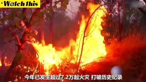 亚马逊雨林今年发生7万多次大火 环保组织:都怪总统