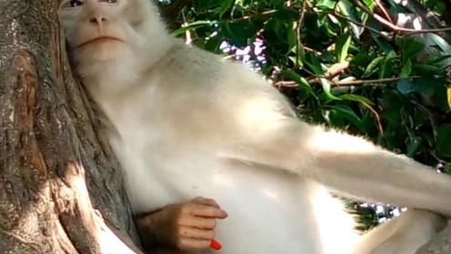 猴子拿着一个辣椒,吃了几口后,场面瞬间失控了!