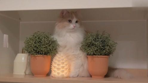 主人睡着时猫咪在干嘛呢?网友:原来晚上猫咪这么活跃