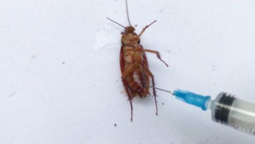小哥将硫酸注射蟑螂体内,画面太美不敢看,网友:心疼小强10秒
