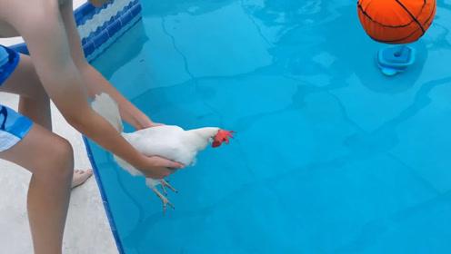 老外测试鸡会不会游泳,鸡的反应绝了!镜头拍下全过程