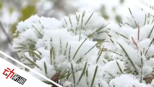 秋季飘雪!中国最北城市漠河下雪 比2018年提前25天