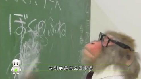 猴子遇见岛国人民,居然瞬间转性,调皮大王秒变学霸?