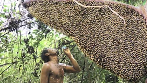 """小伙野外生存为吃蜂蜜,去""""捅""""巨型马蜂窝,网友:是个狠人!"""