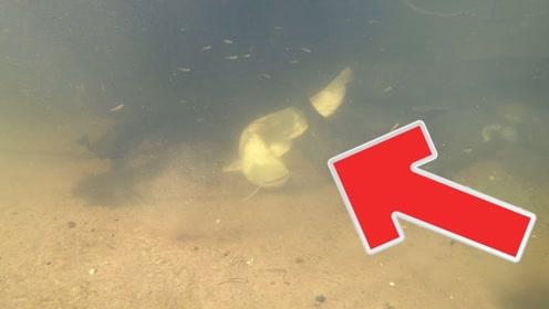 河水很清澈,发现一群大鲶鱼,其中有一条是金黄色的