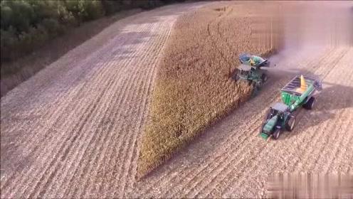 看看美国人是怎样收割玉米的,科技确实比较先进