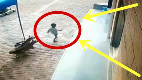 路遇恶狗袭击不要慌,看1岁宝宝如何应对,老母亲表示很欣慰!