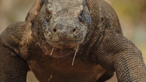 """印度发现5米长""""恐龙"""",村民争先恐后合影,专家看穿真实身份!"""