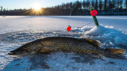 老外在冰面上钓鱼,才下钩就有动静,拽上来后,全场都激动疯了