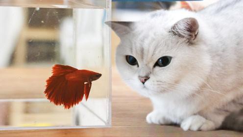 当着5只猫的面换水,猫以为要洗澡紧张惨了