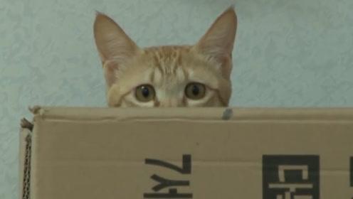 女子家猫崽频繁失窃,家里翻遍未找到,调监控小偷竟是它
