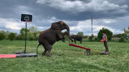 男子站在跷跷板这头,一头大象冲了过来,抬腿一按男子上天了