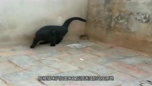 """老鼠:死也要死冲锋路上,你过来呀!下秒""""卒""""!"""